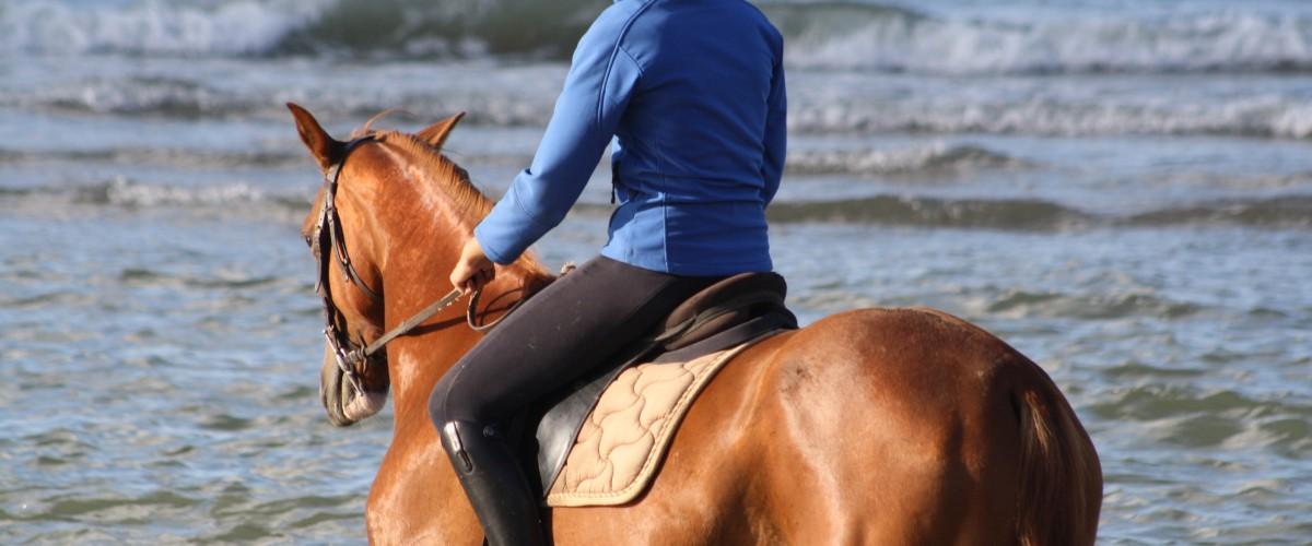 Randonnée sur la plage pour les cavaliers confirmés