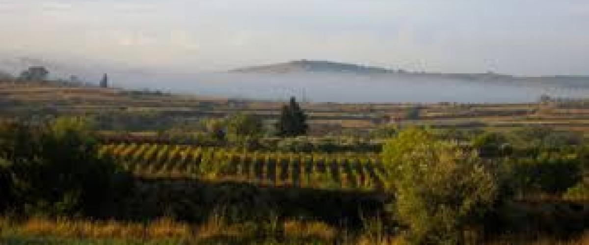 Excursion Romantique dans les vignobles à Montpellier
