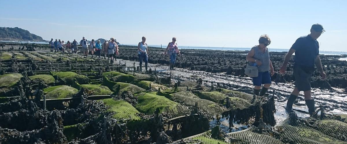 Visite et dégustation des parcs à huîtres de Cancale