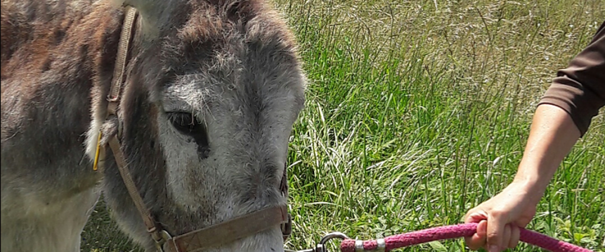 Balade guidée avec des ânes en Dordogne