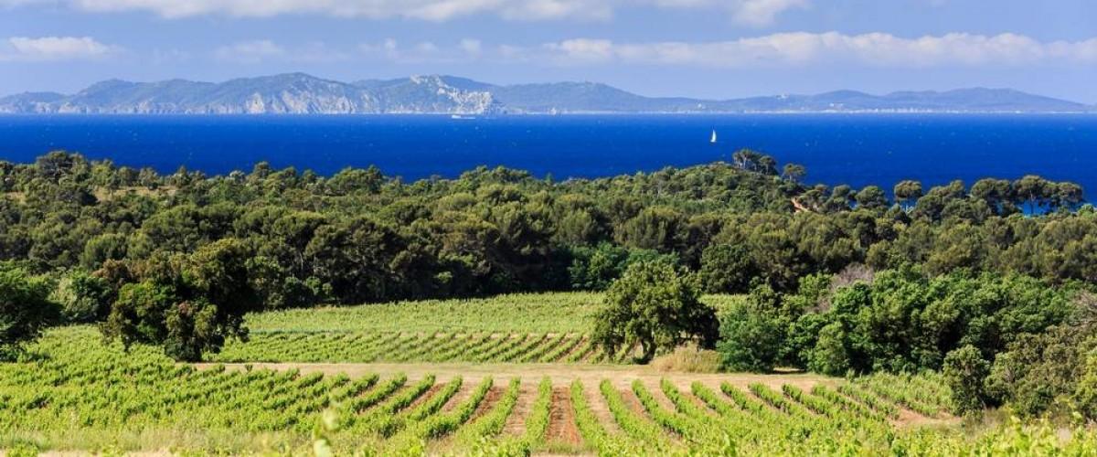 Voyage au coeur des Grands Crus de Provence