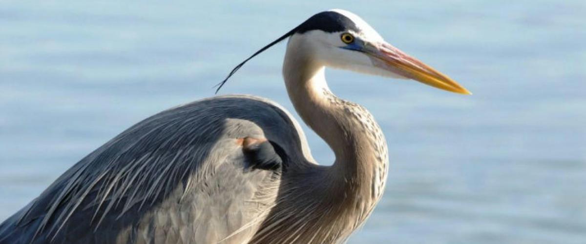 Découverte de la faune et la flore en voilier dans le Sud Ouest avec un guide spécialiste des oiseau
