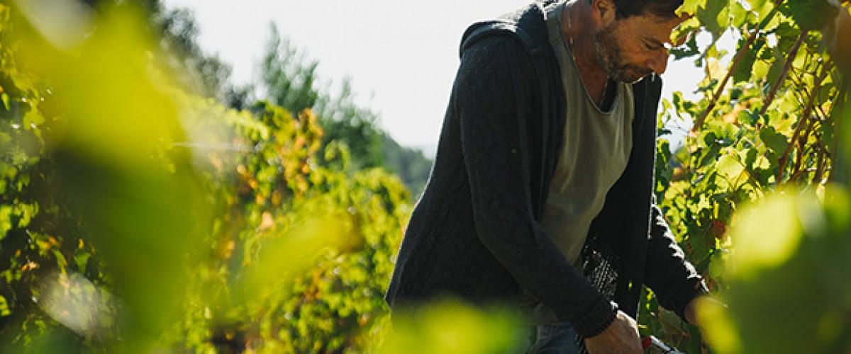 Parcours savoir faire vins & oenotoursime