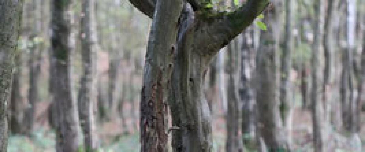 Initiation à la sylvothérapie et au bien-être par la nature