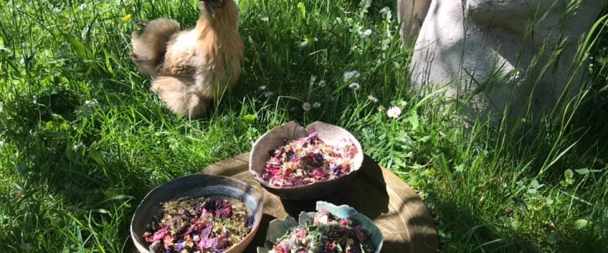 Atelier insolite magie des plantes