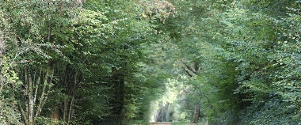 Promenade Récolte Sève de Bouleau
