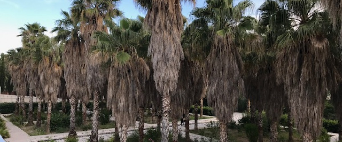 Balade voyage exotique au parc du 26eme centenaire et pique-nique gastronomique