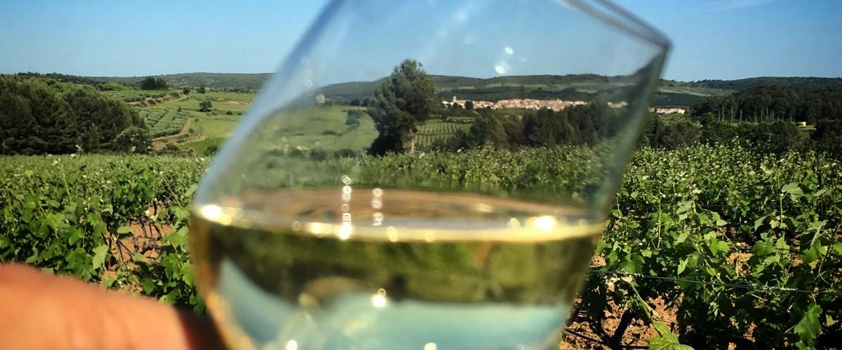 Atelier dégustation tour des vins de France