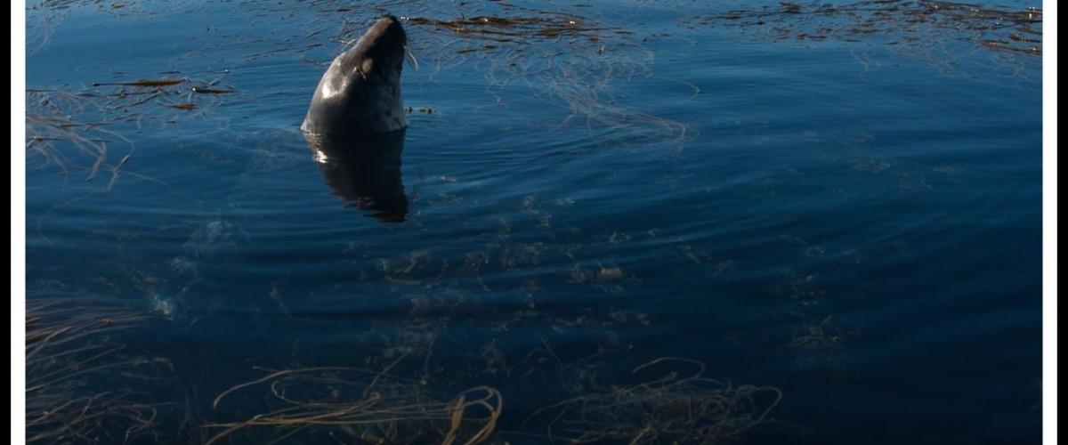 Randonnée en kayak à la rencontre des phoques sur les Etocs
