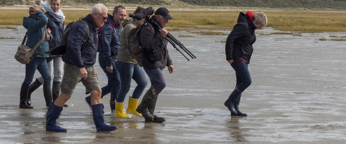 Sortie découverte des phoques, oiseaux et plantes en Picardie