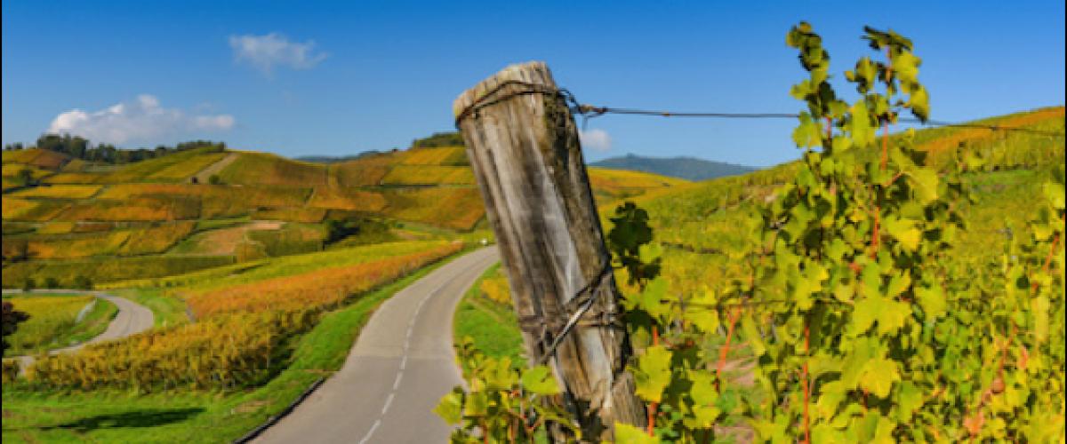 Rallye autonome de la Route des Vins d'Alsace