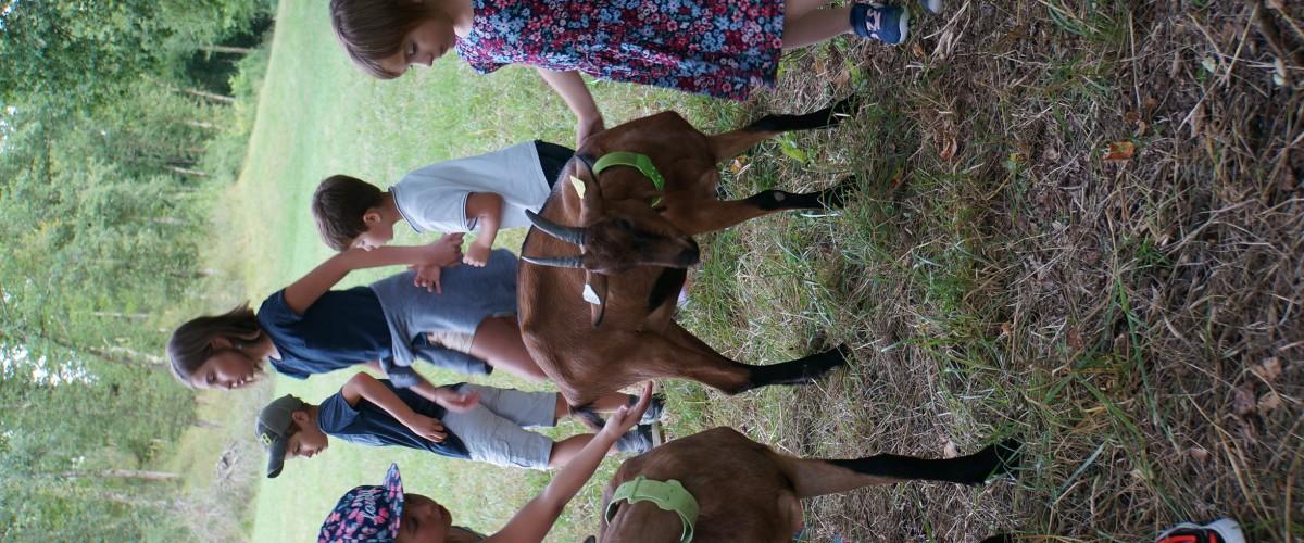 Visite dégustation de lait et fromage de chèvre du Gers
