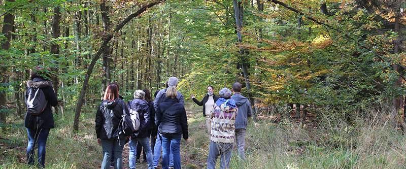 Bain de forêt (sylvothérapie) à Haguenau